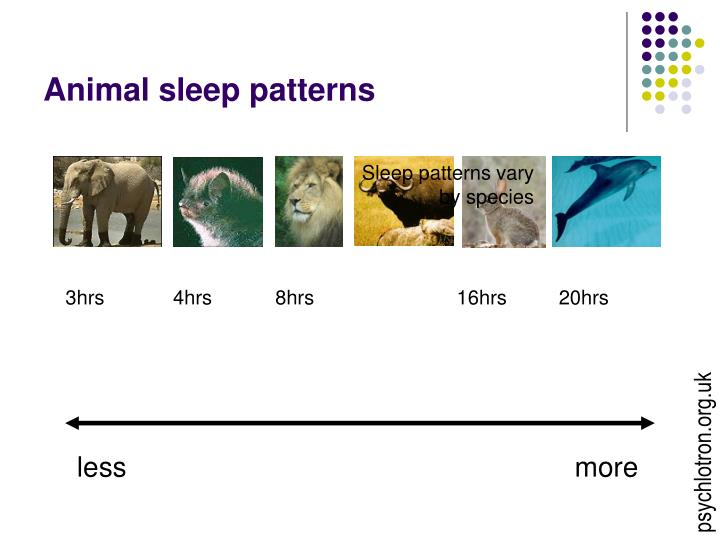 Animal sleep patterns