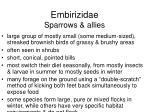 embirizidae sparrows allies