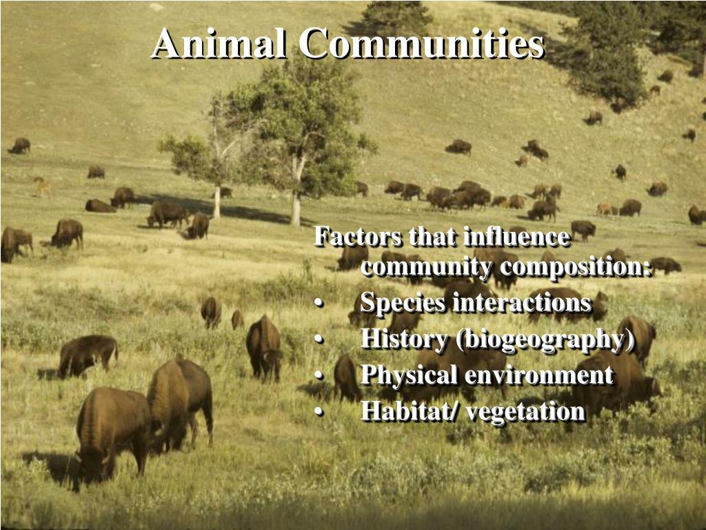 animal communities l.