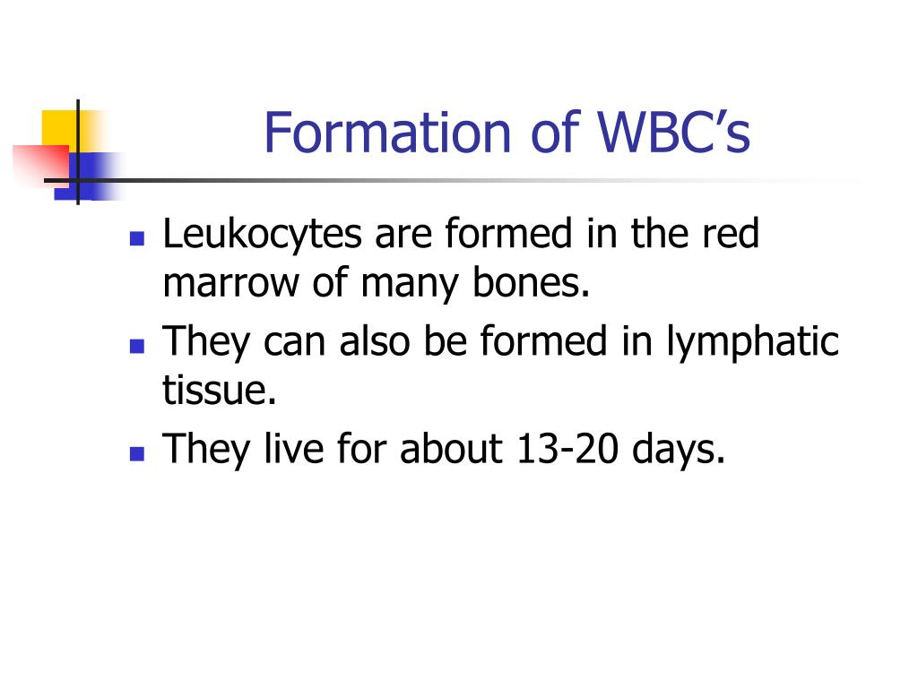 Formation of WBC's