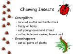 chewing insects14