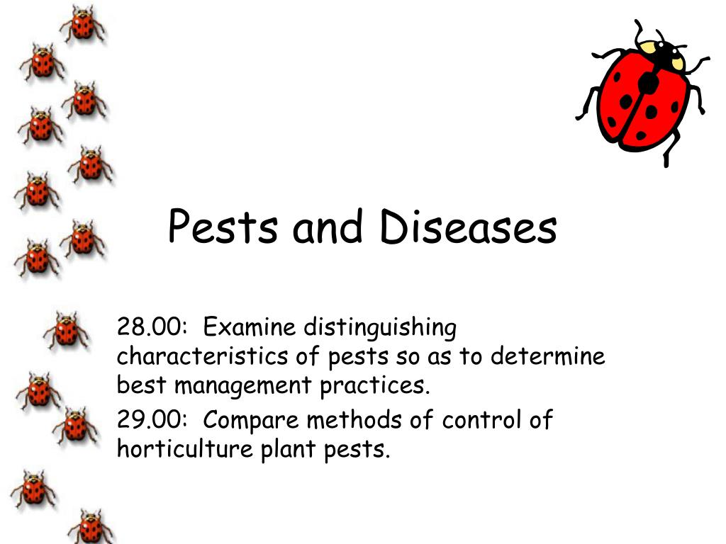 pests and diseases l.