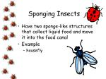 sponging insects