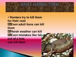 what harms them