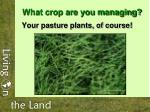 what crop are you managing