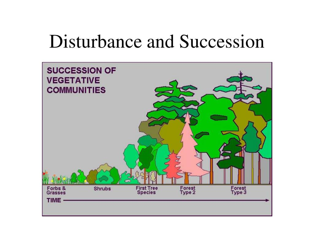 disturbance and succession l.