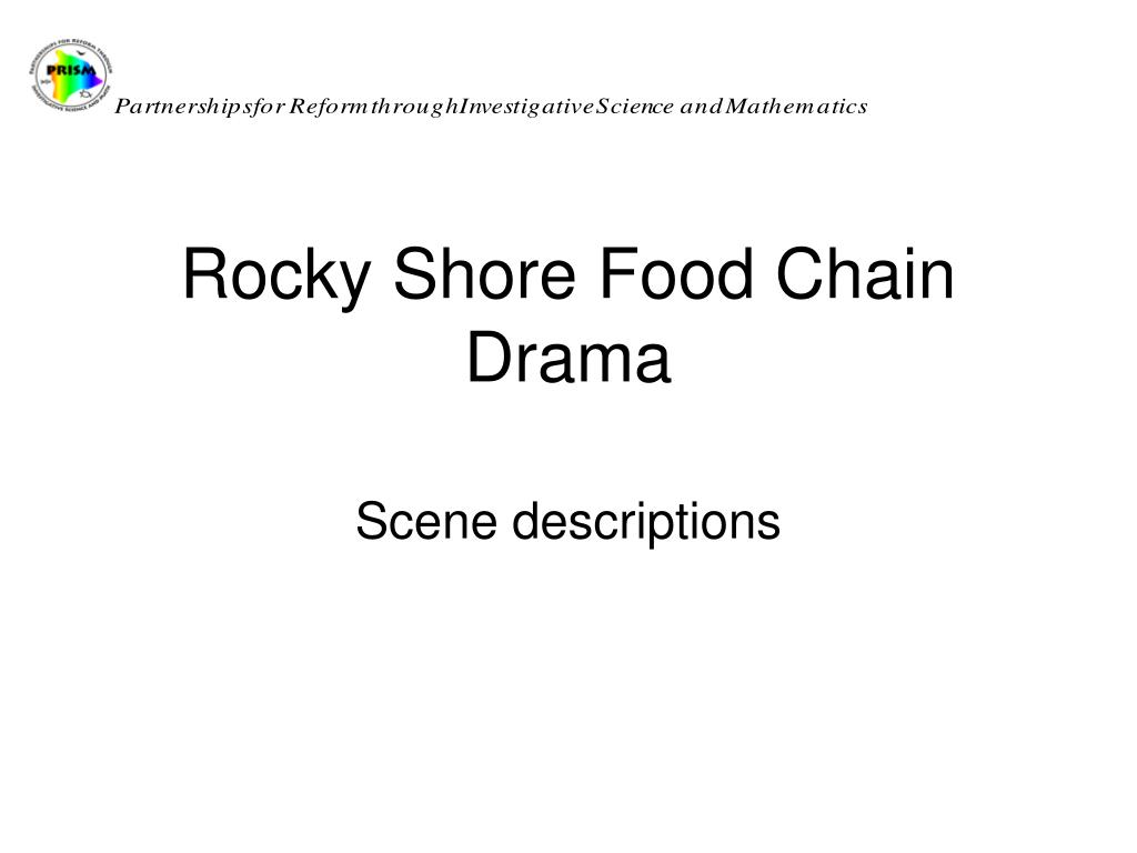 rocky shore food chain drama l.