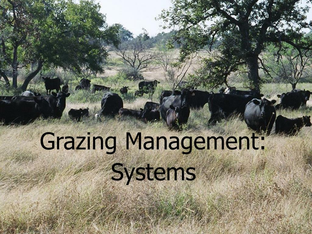 grazing management systems l.