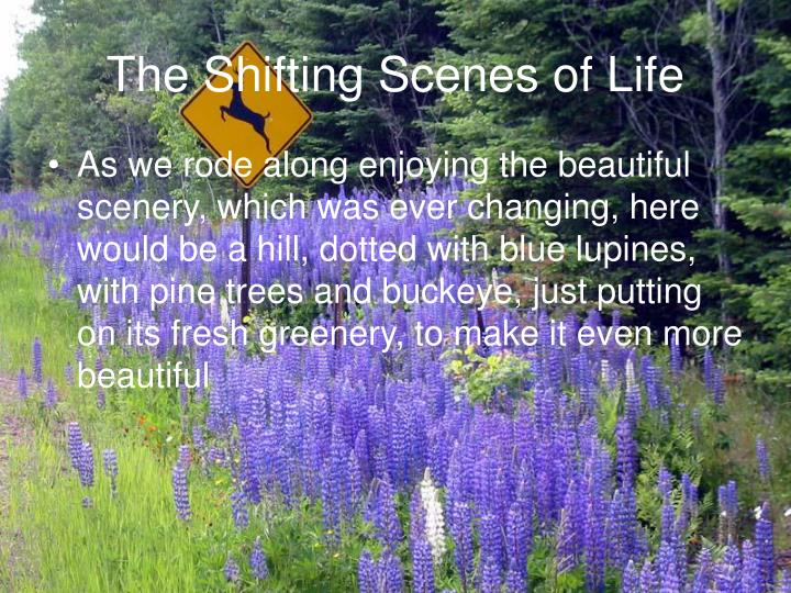 The shifting scenes of life3