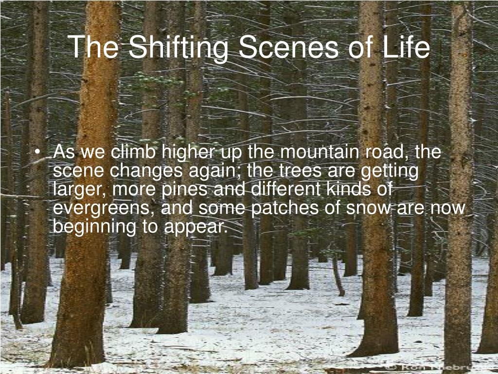 The Shifting Scenes of Life