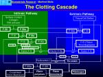 the clotting cascade