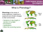 what is phenology