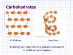 carbohydrates14