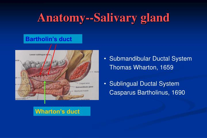 Ppt Chronic Obstructive Sialadenitis Sialendoscopy Powerpoint