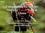 campaigning for species the grey parrot trade in ghana