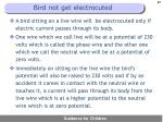bird not get electrocuted