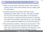 humans brush but animals don t