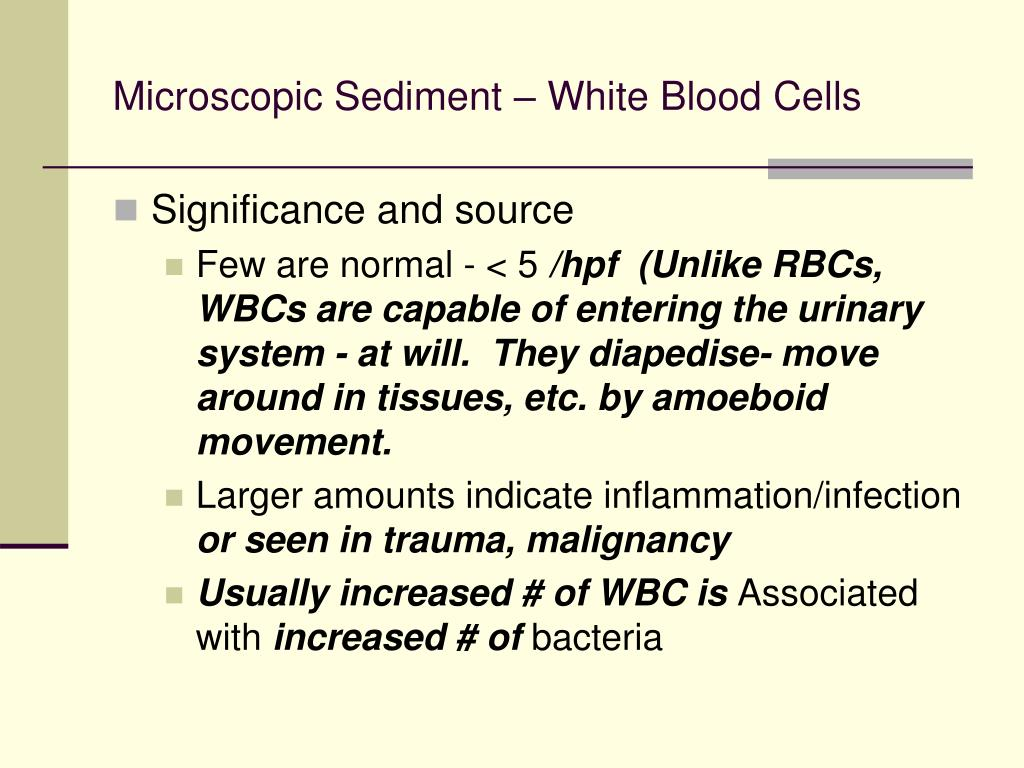 microscopic sediment white blood cells l.