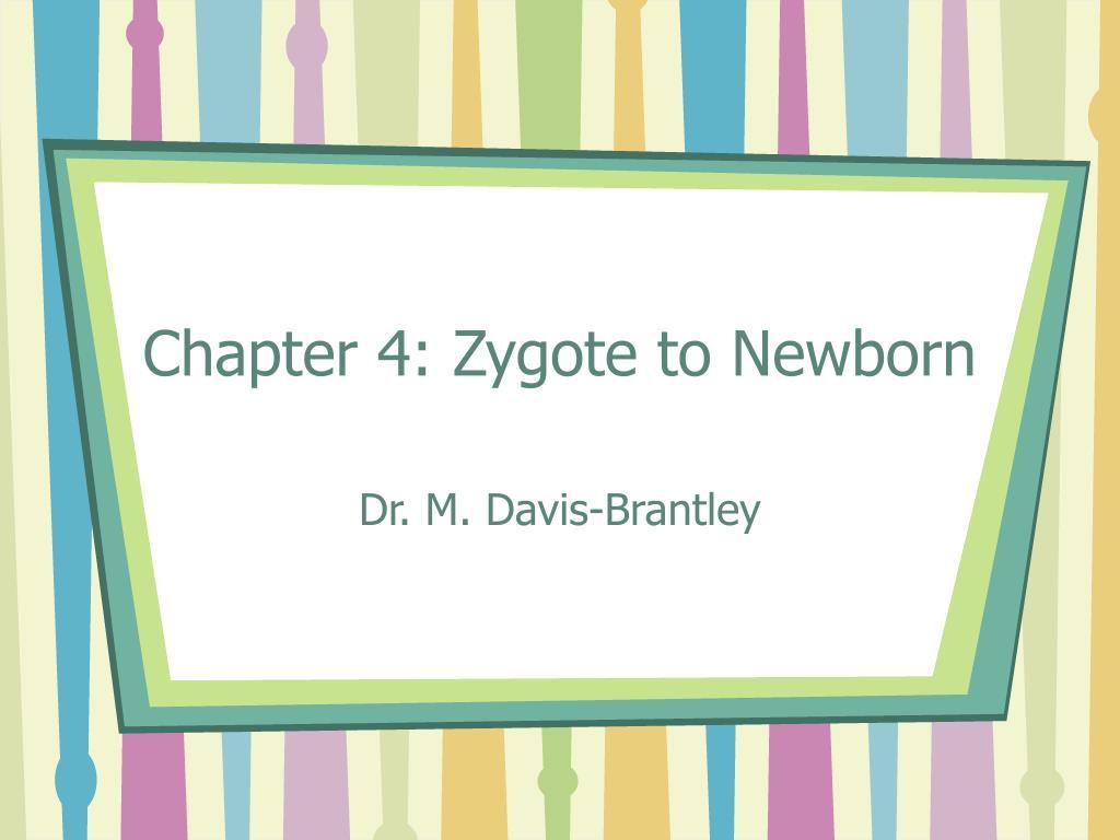 chapter 4 zygote to newborn l.