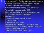 bionecapsulaci n enriquecimiento artemia