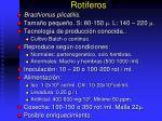 rotiferos
