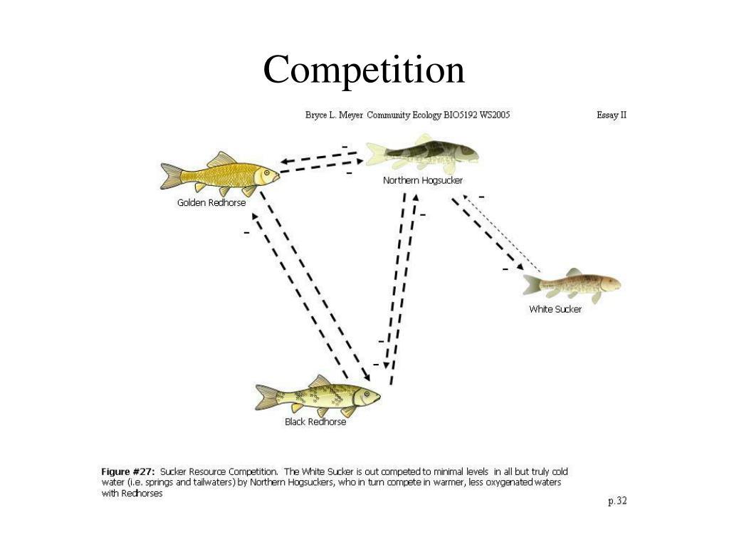 competition l.