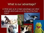 what is our advantage