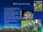 wolf grooming
