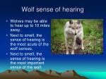 wolf sense of hearing