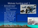 wolves hunting part 1