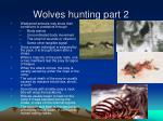 wolves hunting part 2