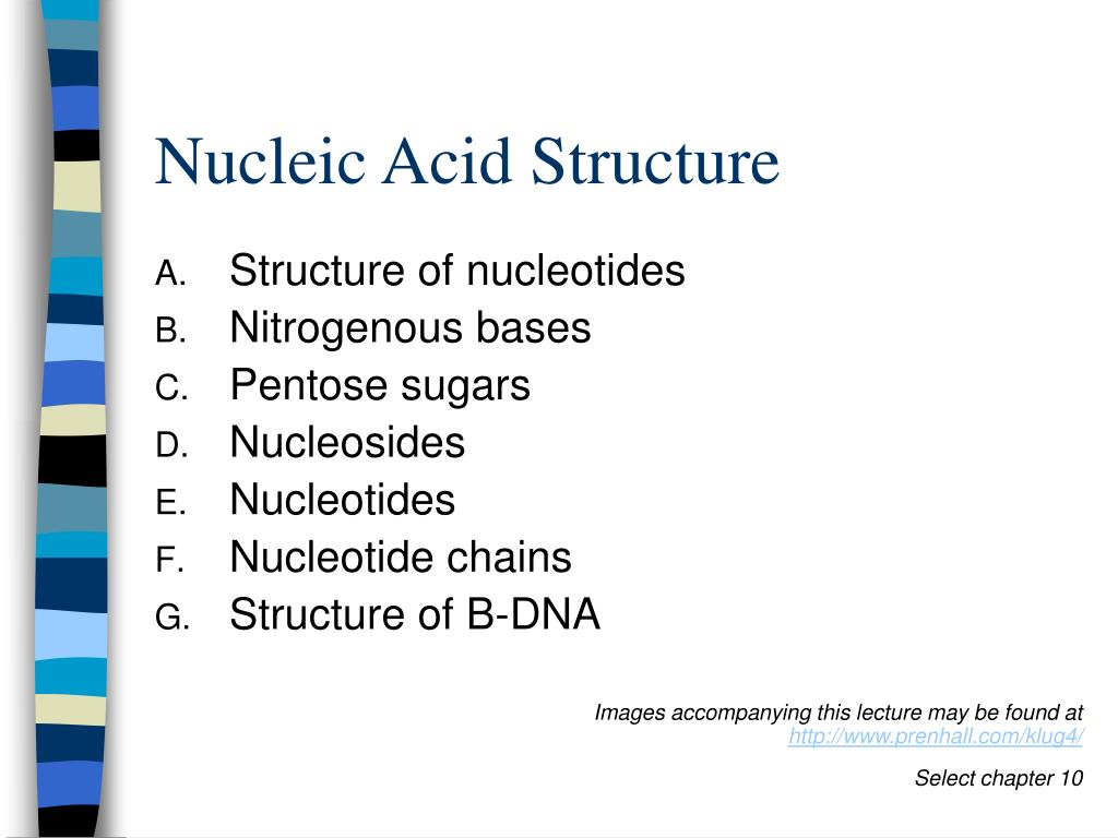 nucleic acid structure l.