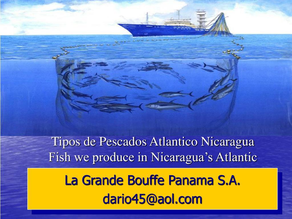 tipos de pescados atlantico nicaragua fish we produce in nicaragua s atlantic l.