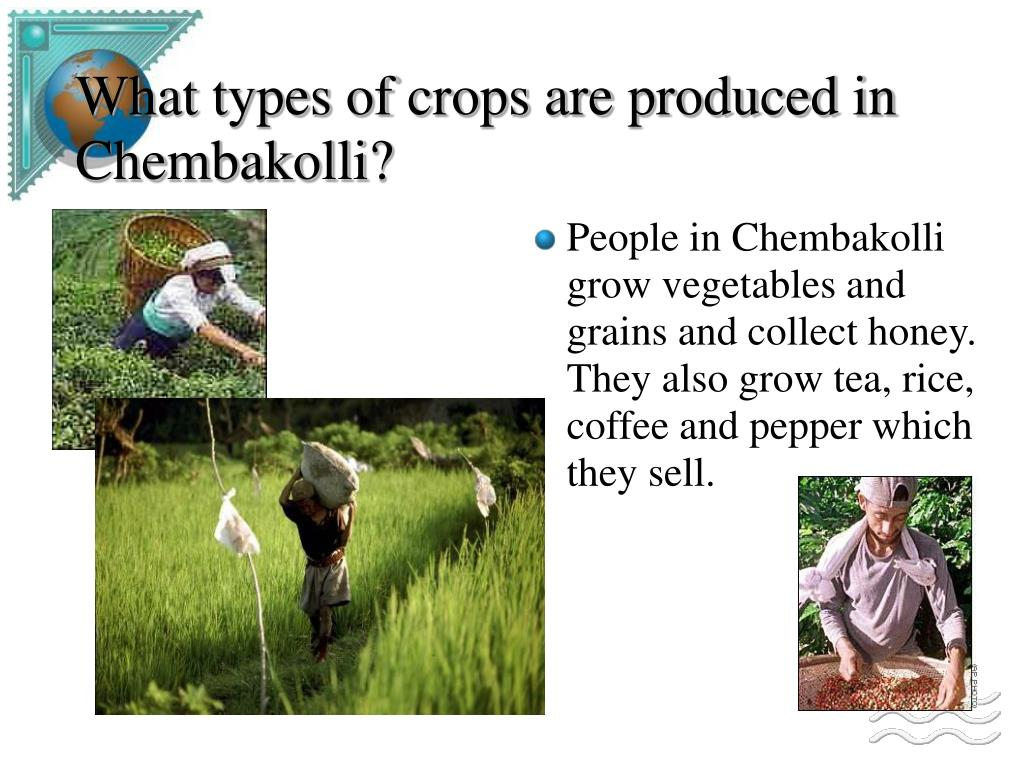what types of crops are produced in chembakolli l.