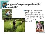 what types of crops are produced in chembakolli