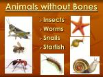 animals without bones