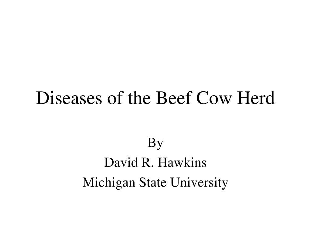 diseases of the beef cow herd l.