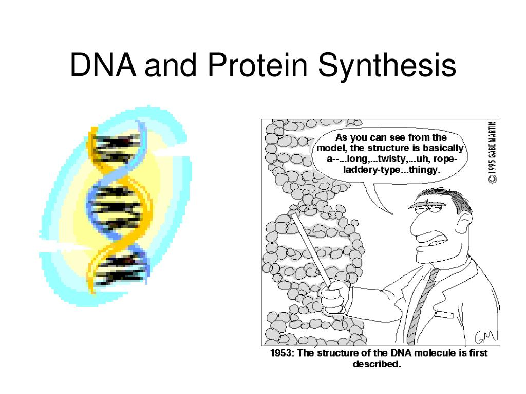 dna and protein synthesis l.