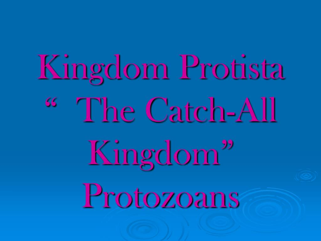kingdom protista the catch all kingdom protozoans l.