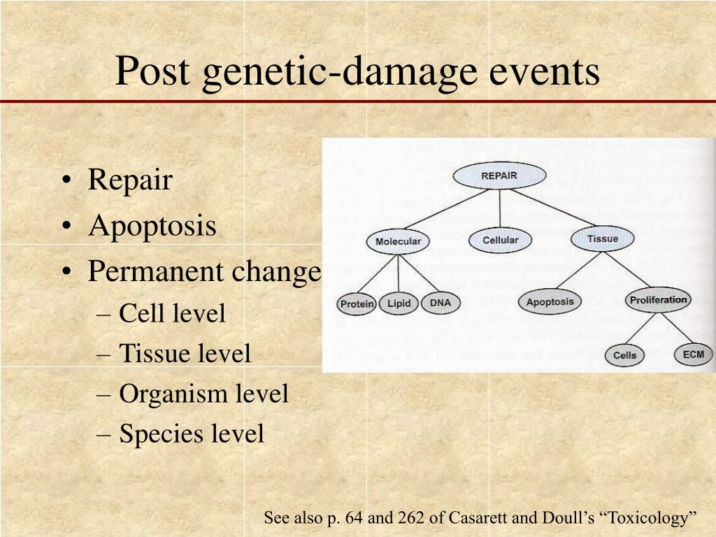 Post genetic-damage events