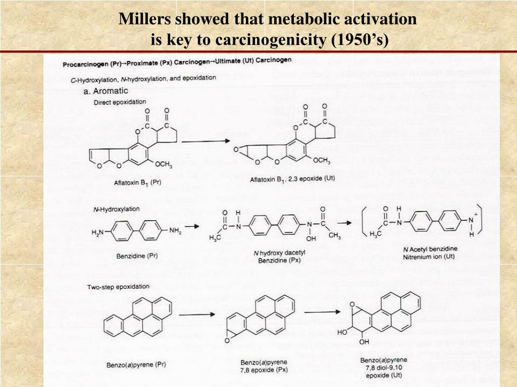 Millers showed that metabolic activation