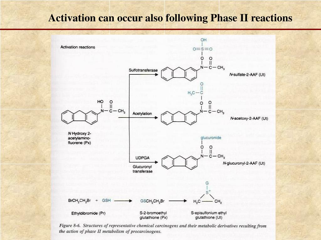 Activation can occur also following Phase II reactions