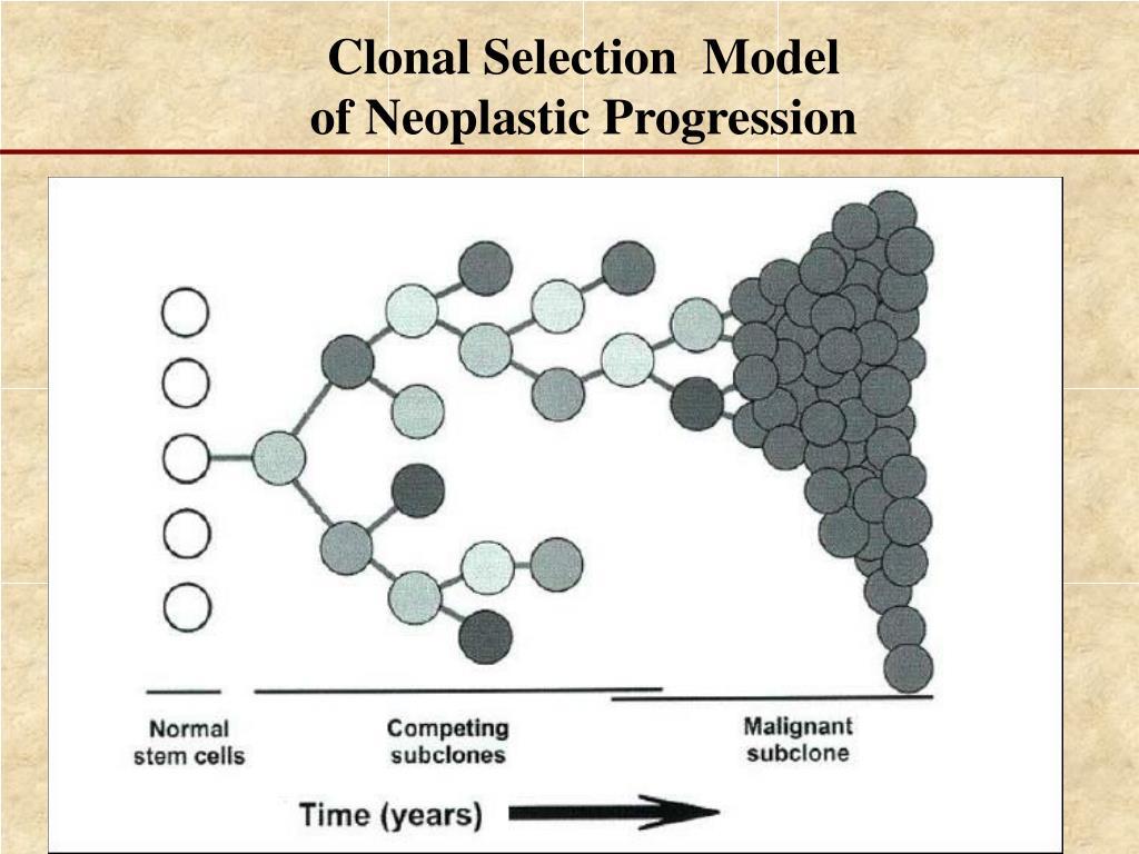 Clonal Selection  Model