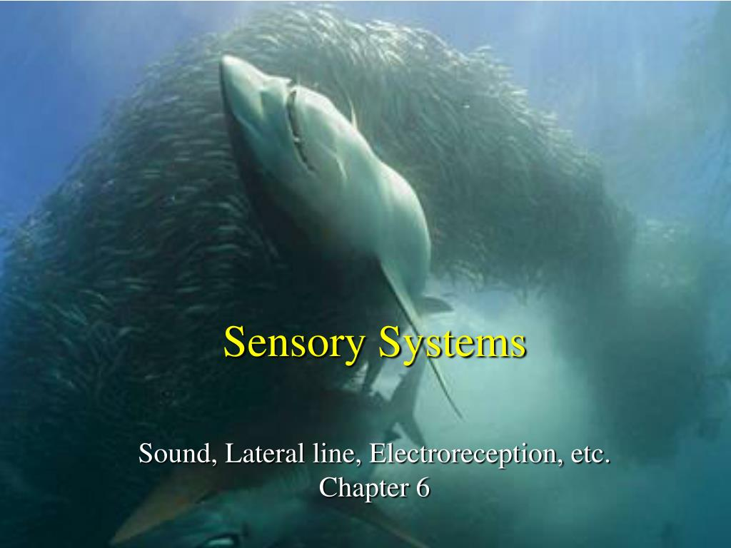 sensory systems sound lateral line electroreception etc chapter 6 l.