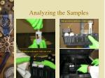 analyzing the samples19