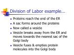 division of labor example