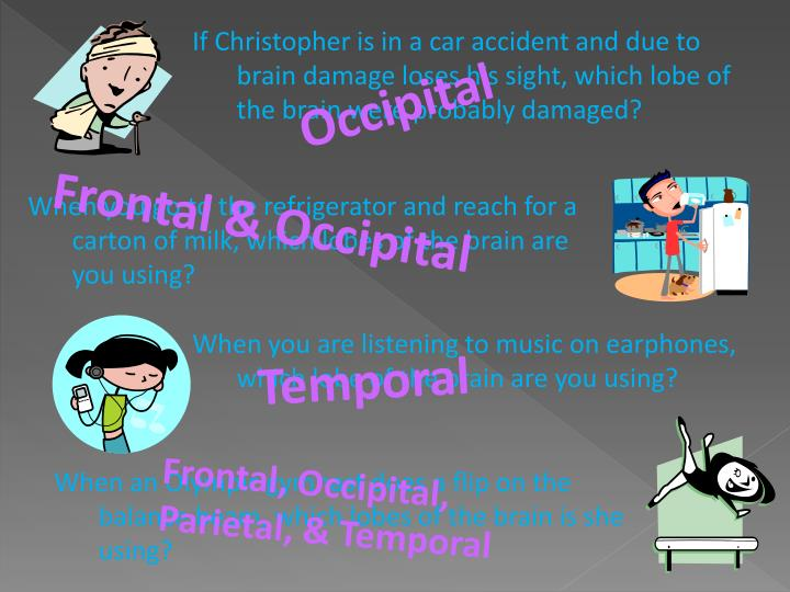 If Christopher is in a car accident and due to brain damage loses his sight, which lobe of the brain...