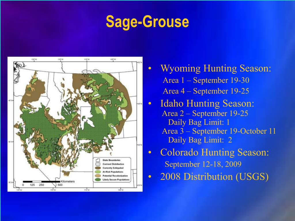Sage-Grouse