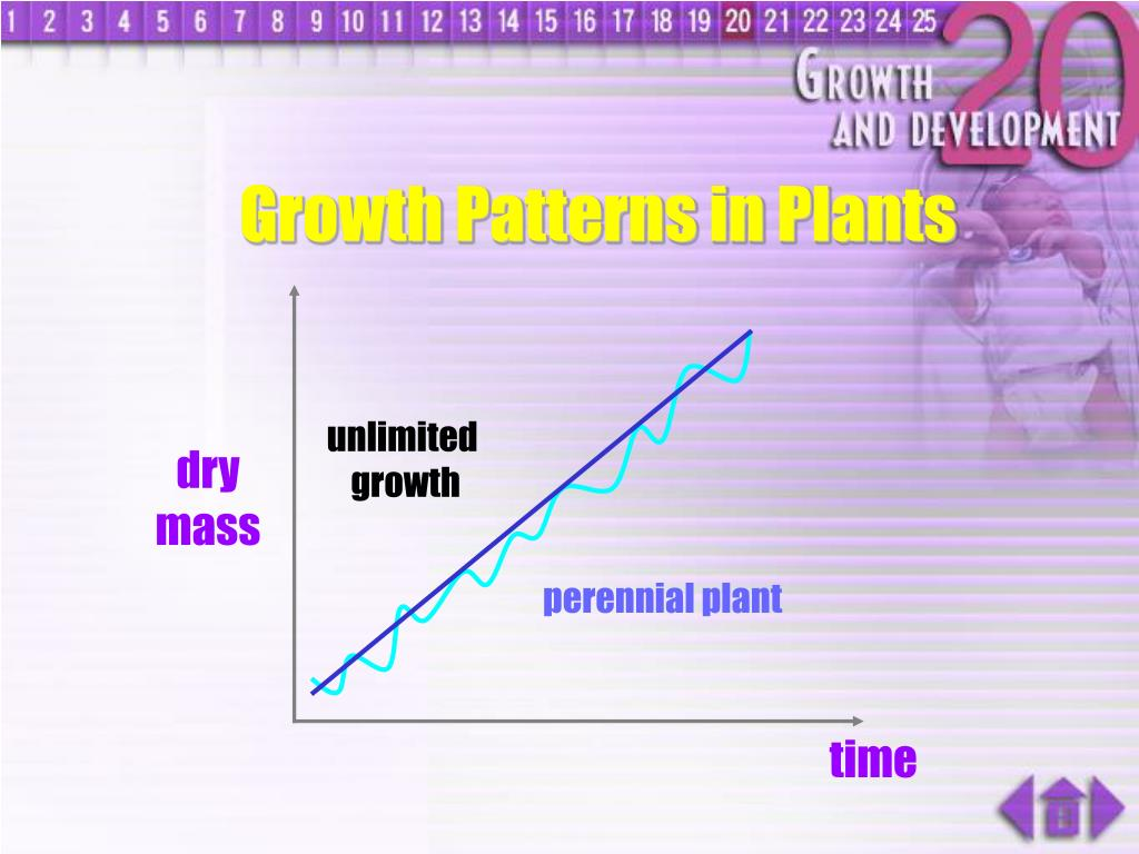 Growth Patterns in Plants
