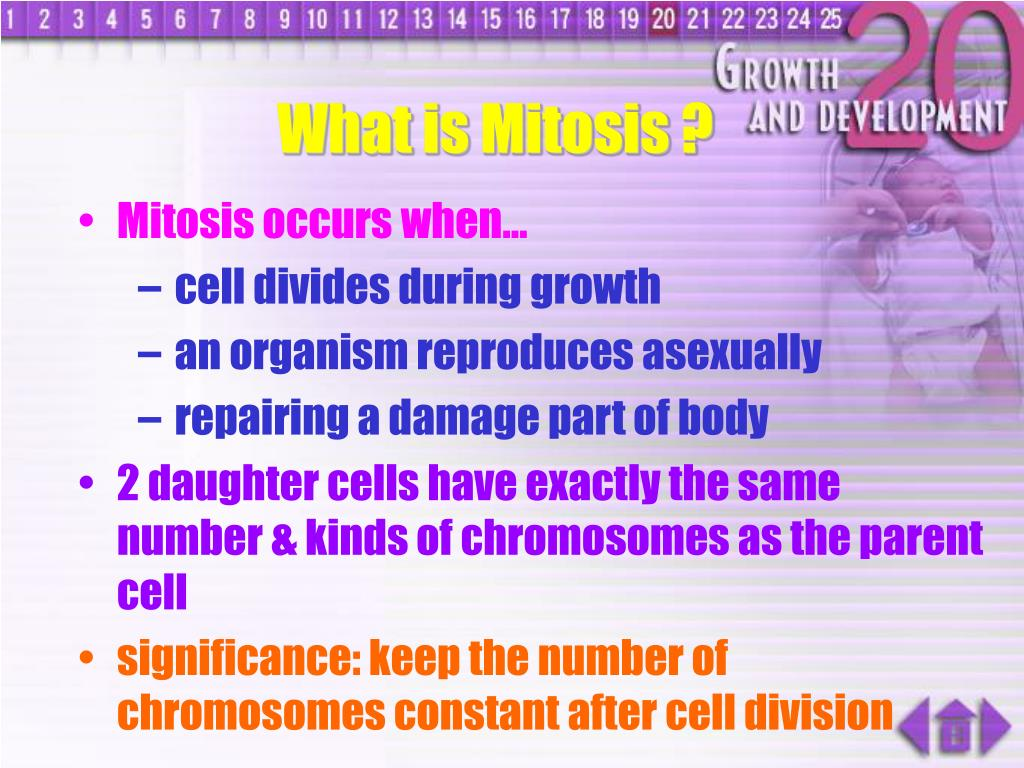 What is Mitosis ?